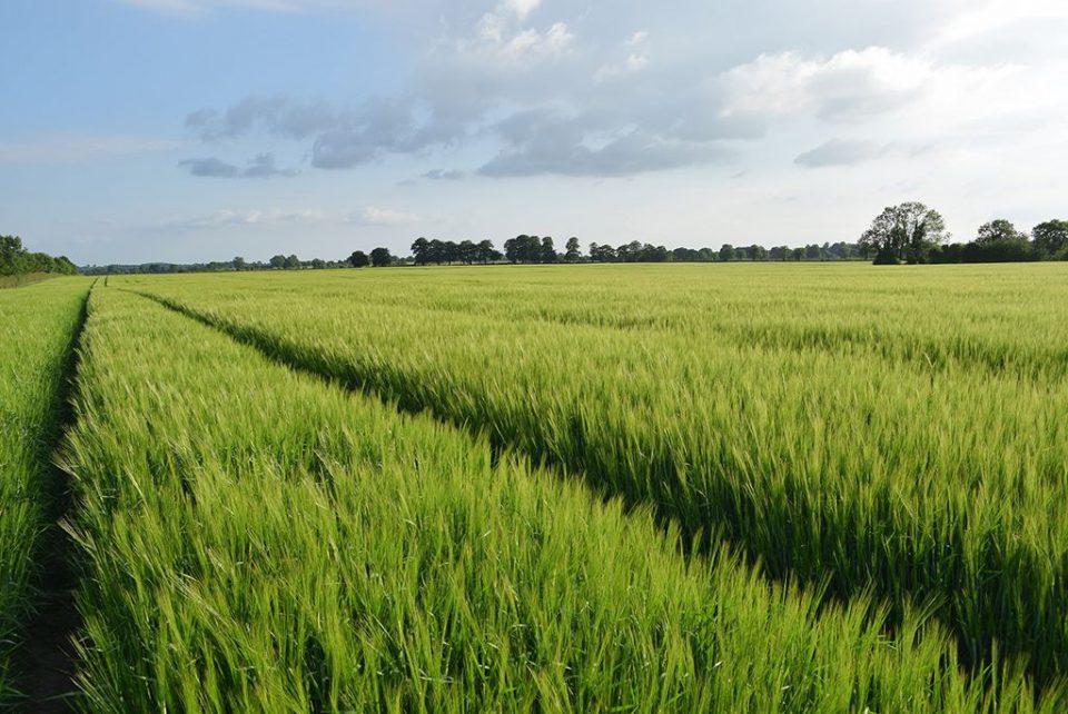 Fields | Peter Mooney CC SA 2.0
